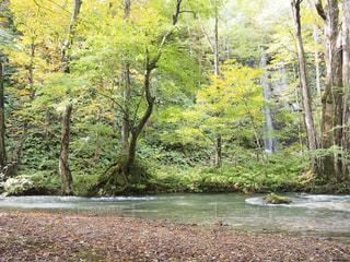 奥入瀬渓流の写真・画像素材[1739696]