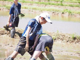 田植え体験で泥だらけの写真・画像素材[1785973]