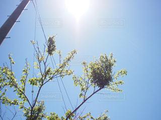 いい天気の写真・画像素材[1791974]