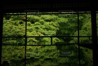 ガラスのドアの写真・画像素材[1320641]