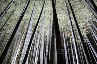 竹林のライトアップの写真・画像素材[1324324]