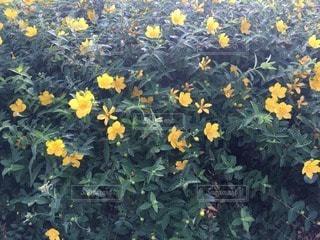 花の写真・画像素材[40628]