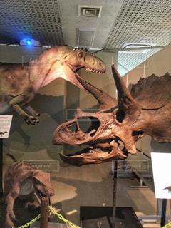 恐竜の写真・画像素材[1407667]