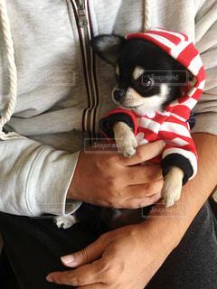 愛犬を抱っこの写真・画像素材[1574236]