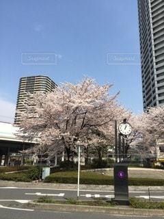 春の写真・画像素材[40716]