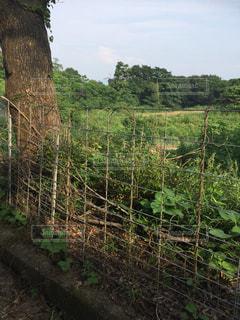 フェンスで囲まれたエリアの木の写真・画像素材[1323332]