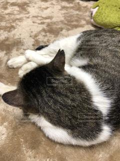 地面に横になっている猫の写真・画像素材[1323739]