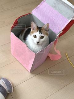 ボックスに座って猫の写真・画像素材[1323740]