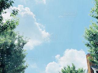 夏の青空の写真・画像素材[1329319]