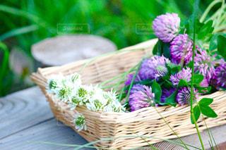 道草の花々のアップの写真・画像素材[1325249]