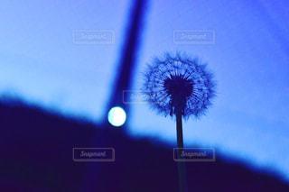 夏のわたげの写真・画像素材[1329111]
