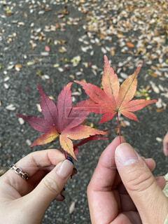 秋の訪れを感じる紅葉した紅葉の写真・画像素材[4332894]