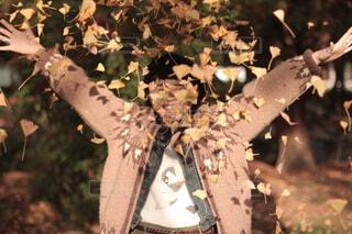イチョウの葉が舞うの写真・画像素材[4776855]