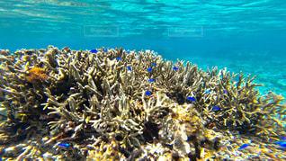 沖縄石垣島のサンゴ礁の海🐠🌈の写真・画像素材[1327815]