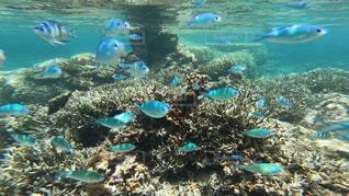 沖縄 石垣島の海の中🐠🌈の写真・画像素材[1327823]