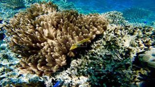 沖縄石垣島のサンゴ礁の海🐠🌈の写真・画像素材[1327960]