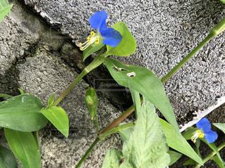 岩の上に座っているカエルの写真・画像素材[1327890]