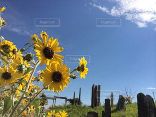 黄色の花の写真・画像素材[1327923]