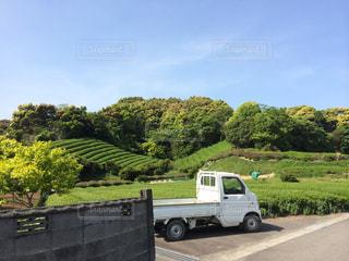 茶畑と軽トラの写真・画像素材[1327980]