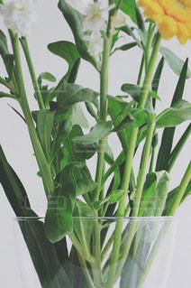 flowersの写真・画像素材[1776997]