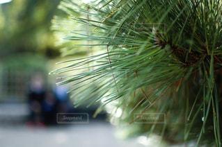 近くの植物のアップの写真・画像素材[1381152]