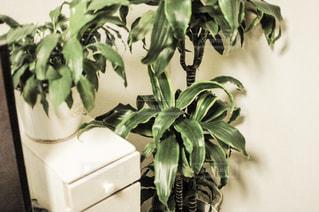 植物の花と花瓶の写真・画像素材[1822364]