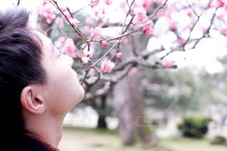 兼六園の梅の写真・画像素材[1868533]