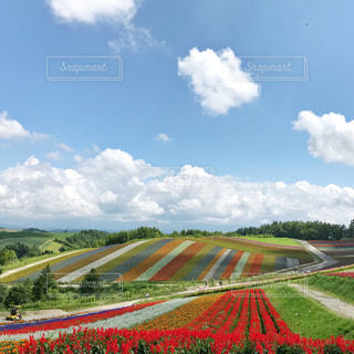 四季彩の丘の写真・画像素材[1329058]