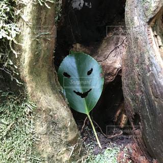 森の妖精の写真・画像素材[1388039]