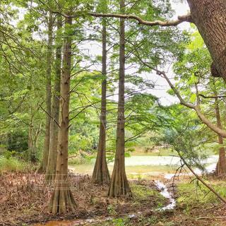 九大の森の写真・画像素材[2425336]