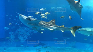 プールの水でカモメの群れの写真・画像素材[1329375]