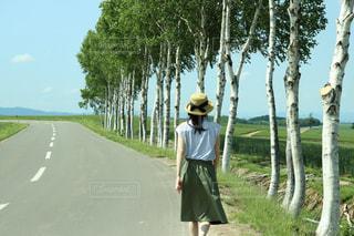 白樺の木の写真・画像素材[1329915]