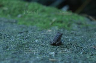 地面に座っているカエルの写真・画像素材[1329925]
