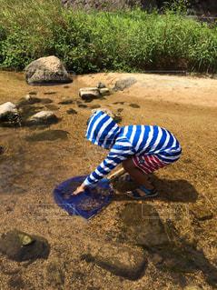 川遊びをする男の子の写真・画像素材[1401729]