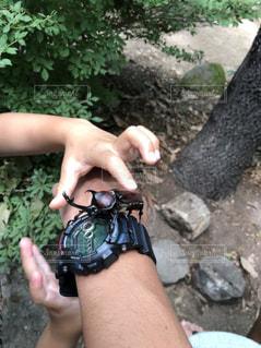 カブト虫 触ってみたい!の写真・画像素材[1405237]