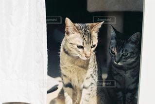 お外が気になる子猫たちの写真・画像素材[1329951]