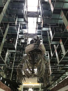 メキシコシティの図書館の写真・画像素材[1337509]