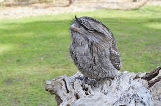 木にとまって眠る鳥の写真・画像素材[3635704]