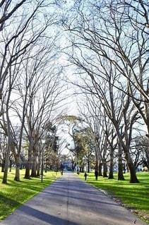 秋冬の公園の木々の写真・画像素材[3635706]
