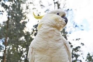 鳥のクローズアップの写真・画像素材[3635709]