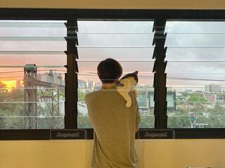 窓から夕焼けを見る猫と男性の写真・画像素材[3941731]