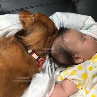 犬と赤ちゃんの写真・画像素材[1333197]