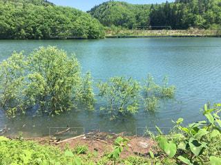 増水した池、沈む木の写真・画像素材[1332393]