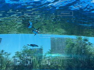 サンシャイン水族館のペンギンの写真・画像素材[1363844]