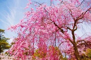 花の写真・画像素材[41118]