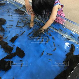 ドクターフィッシュの水槽に手を入れる女の子の写真・画像素材[1413858]