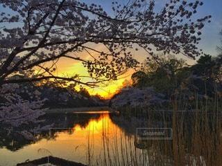 自然の写真・画像素材[41380]