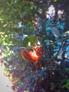 昆虫の写真・画像素材[361394]