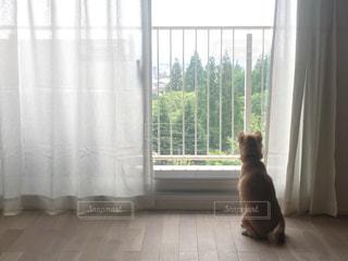 窓の外を見つめる犬の写真・画像素材[1337720]