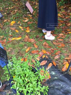 庭に座っている人の写真・画像素材[1513545]